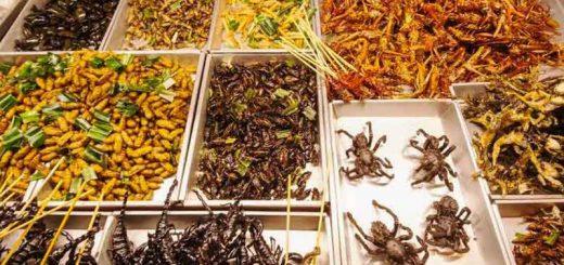پرورش حشرات خوراکی
