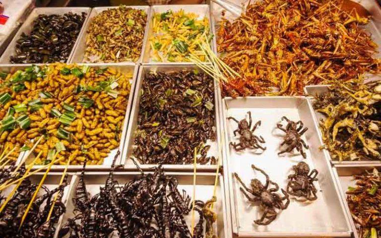 ایده پرورش حشرات خوراکی
