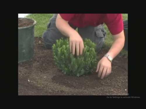 استفاده از کود ورمی کمپوشت در پرورش گیاهان