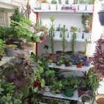 کسب و کار پرورش گل و گیاه در خانه