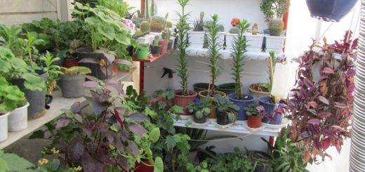 ایده پرورش گل و گیاه در منزل