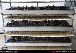 ایده پرورش پرندگان قفسی در خانه