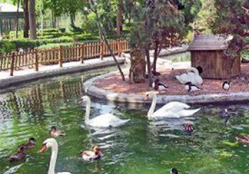 ایده راه اندازی باغ پرندگان