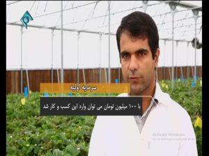 ایده پرورش توتوفرنگی در گلخانه
