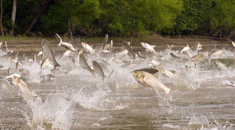 پرورش ماهی گرمابی