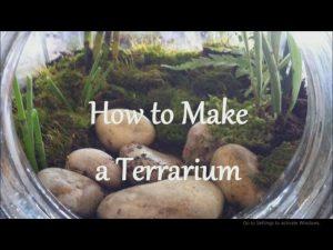 Read more about the article چگونه یک تراریوم (باغ شیشه ای) بسازیم؟