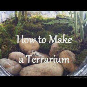 چگونه یک تراریوم (باغ شیشه ای) بسازیم؟