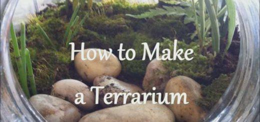 روش ساخت تراریوم (باغ شیشه ای) در خانه