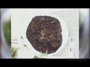 خاک برای ساخت تراریوم