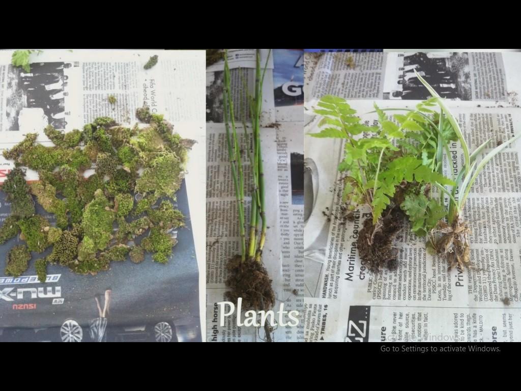 گیاه برای تراریوم