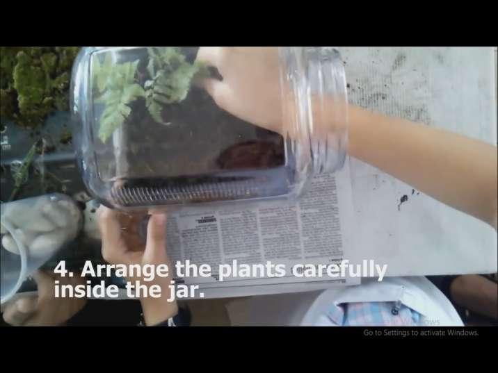 کاشت گیاهان در تراریوم (باغ شیشه ای)