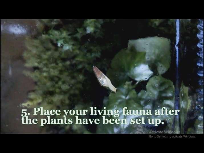 افزودن جانداران به تراریوم (باغ شیشه ای)