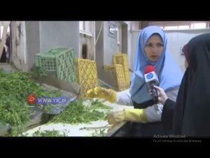 کارگاه پاک کردن سبزی
