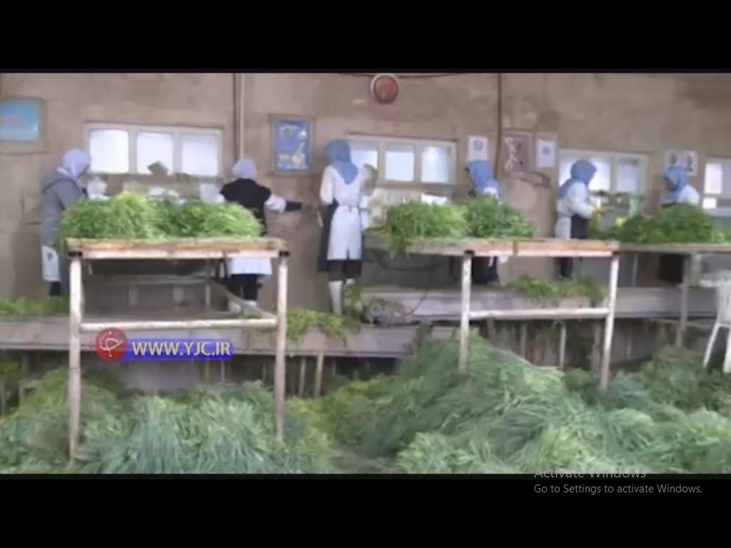 کارآفرینی با پاک کردن سبزی در کارگاه پاک کردن سبزی