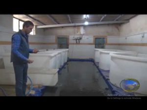 پرورش ماهی در مجید آباد