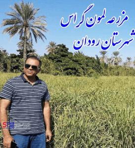کشت علف لیمو در شهرستان رودان