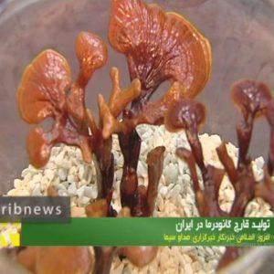 کارآفرینی با تولید قارچ گانودرما لوسیدوم