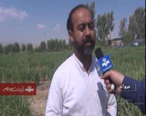 بازار تضمینی خرید علف لیمو یا لمون گراس در ایران