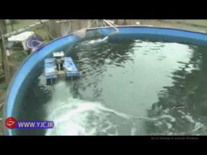 صرفه جویی 90 درصدی استخرهای پرورش ماهی خاویار