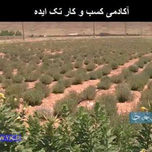 کارآفرینی با کشت گیاهان دارویی
