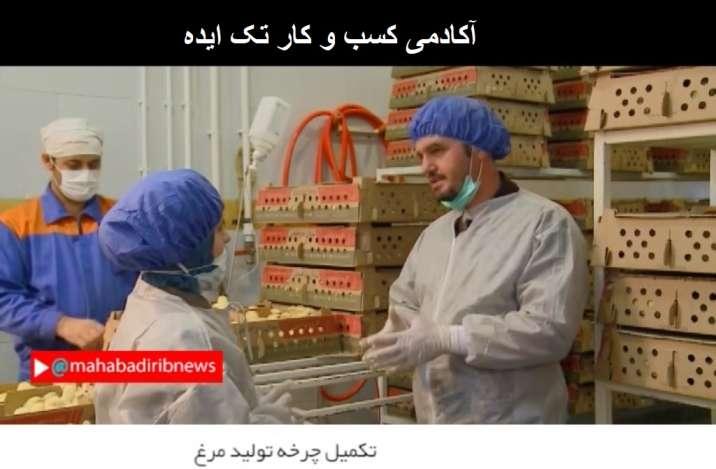 عزیز حسینی کارآفرینی با تکمیل چرخه تولید مرغ