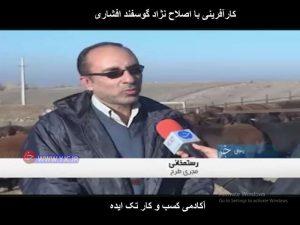 رستخمانی مجری طرح اصلاح نژاد گوسفند افشاری