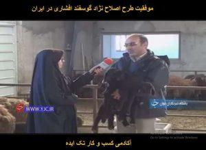 موفقیت طرح اصلاح نژاد گوسفند افشاری در ایران