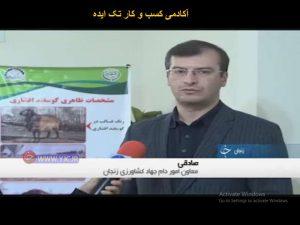 کوفقیت اجرای طرح اصلاح نژاد گوسفند افشاری