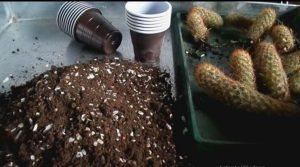 آماده سازی بستر برای پرورش کاکتوس در خانه