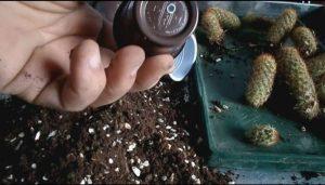 روش آماده سازی بستر جهت کاشت کاکتوس در خانه