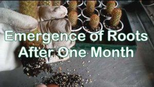 آموزش صفر تا صد کاشت کاکتوس در خانه