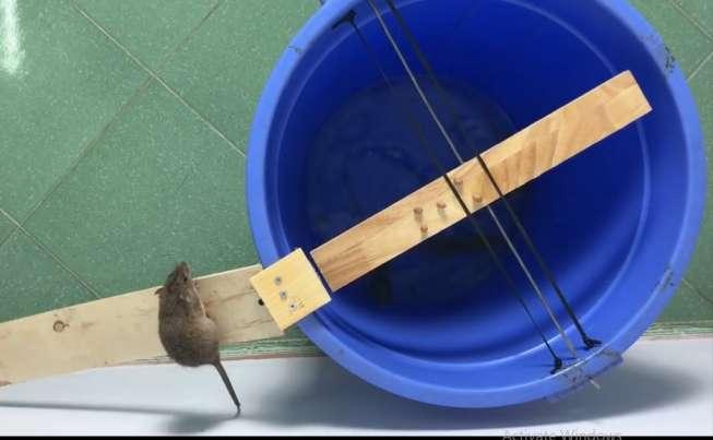 ایده و خلاقیت در ساخت تله موش