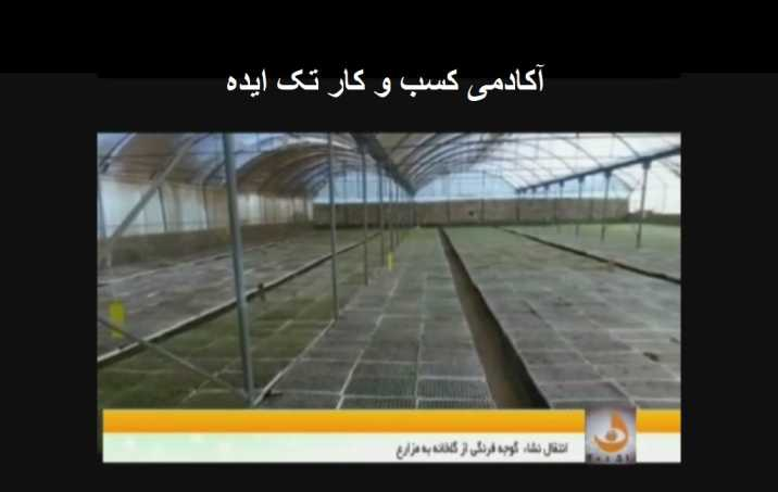 کارآفرینی با تولید نشاء گوجه فرنگی