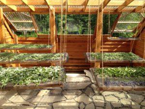 ایده راها ندازی مزرعه پرورش گیاهان دارویی