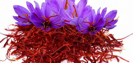 کارآفرینی با روش جدید کشت زعفران در خانه