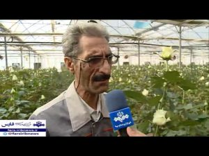 کارآفرینی با تولید گل شاخه بریده