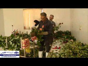 تولید هیدرپونیک گل شاخه بریده
