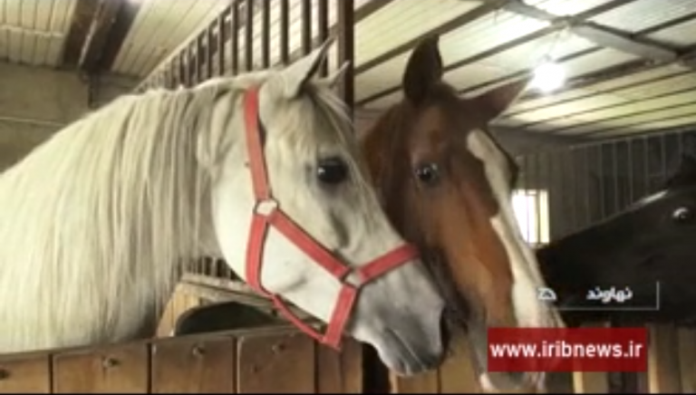 کارآفرینی با پرورش اسب ترکمن