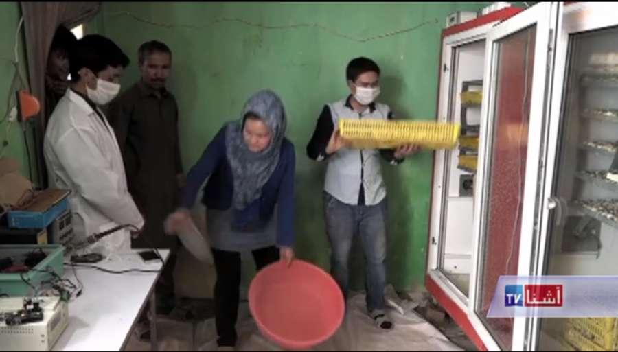 ساخت دستگاه جوجه کشی بودنه توسط بانوی افغانستانی
