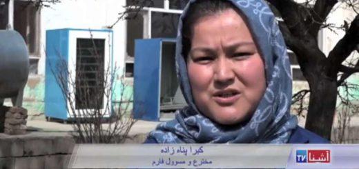 کارآفرینی بانوی افغانستانی با تولید و پرورش بودنه