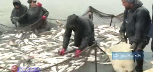 قطب پرورش ماهی در ایران