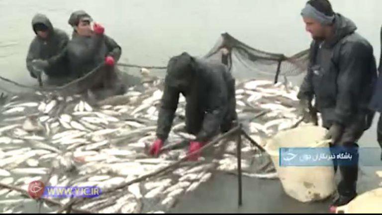 رشت: قطب پرورش ماهی در ایران