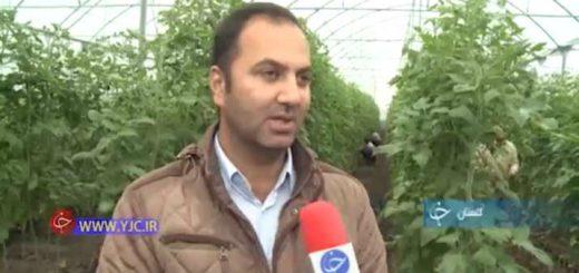 کارآفرینی با راه اندازی گلخانه پرورش گوجه