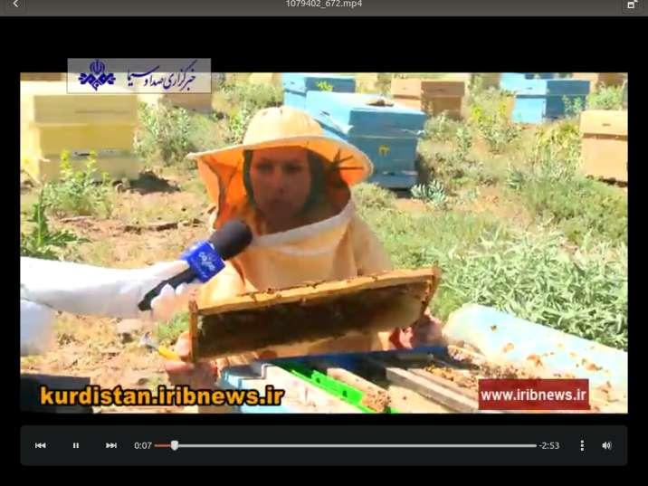 موفقیت کارآفرین زنبوردار پس از بارها شکست!