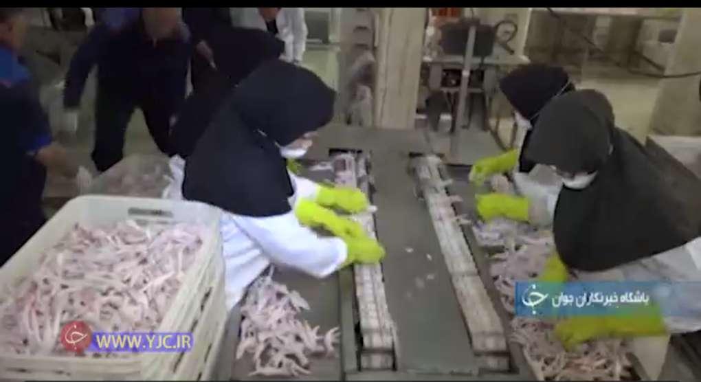 ظرفیت بالای تولید پای مرغ در مازندران