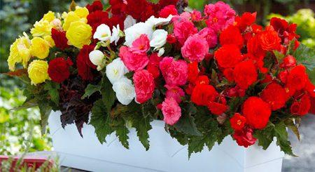 تولید بذر گل و گیاهان زینتی