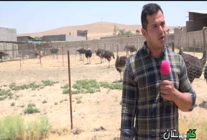 کسب و کار پر سود پرورش شتر مرغ