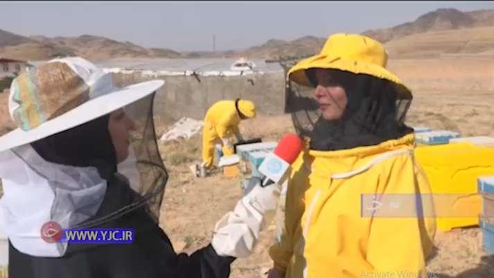 کسب و کار پر سود پرورش زنبور عسل زوج قمی