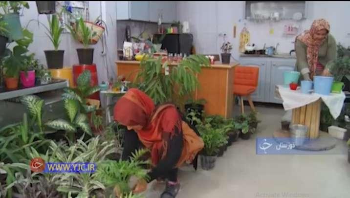 ایده جدید کافه گلخانه در اهواز