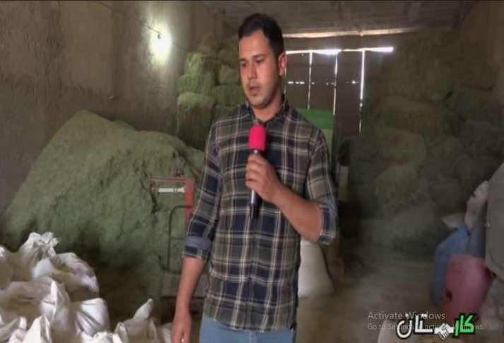 مشکل تامین یونجه برای پرورش دهندگان شتر مرغ